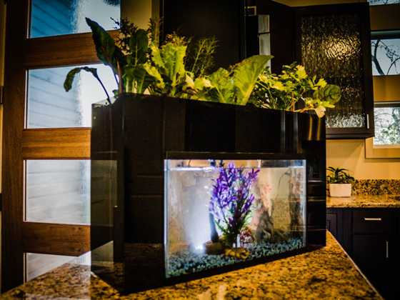 Self clean fish tank